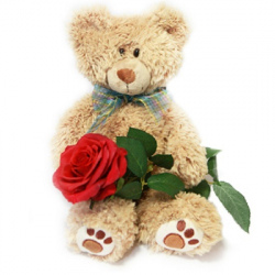 Adorable Push Bear with Rose